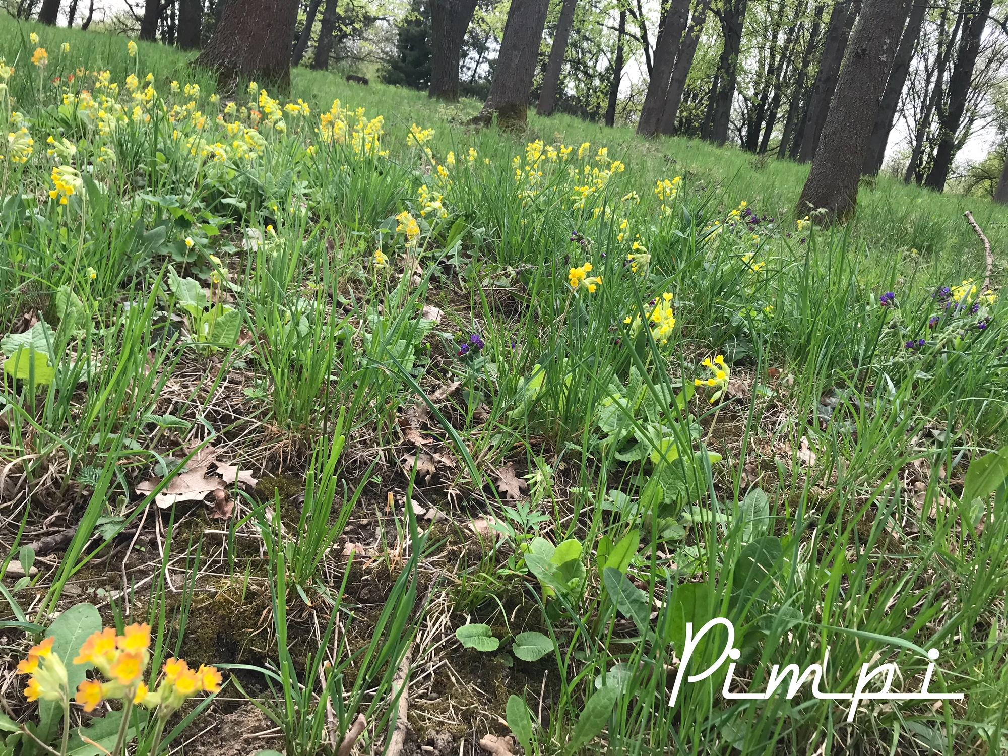 pimpi-cestovanie-bábo-bábätko-botanická záhrada-košice-jar-prechádzka-les-zeleň-tulipány-narcisy