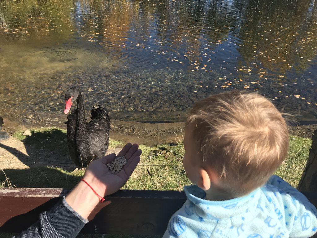 pimpi-bábo-bábätko-cestovanie s bábom-cestovanie-mama blog-zvieratká-mini zoo-zveropark-ubytovanie so zážitkom-slovensko