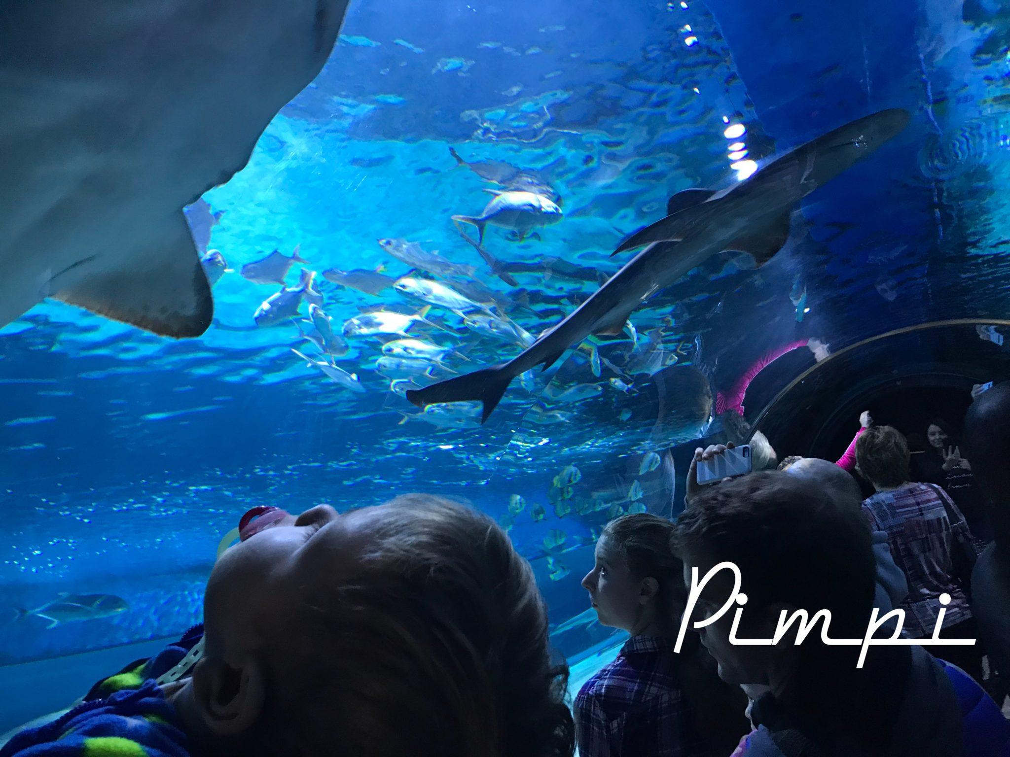 pimpi-bábo-cestovanie-cestuj s deťmi-bábo do sveta-budapešť-tropikárium-ryby-žraloky-krokodíl-chrobáky-korytnačky-zvieratká-zážitok-podmorský svet-more-oceán-zábava-hry