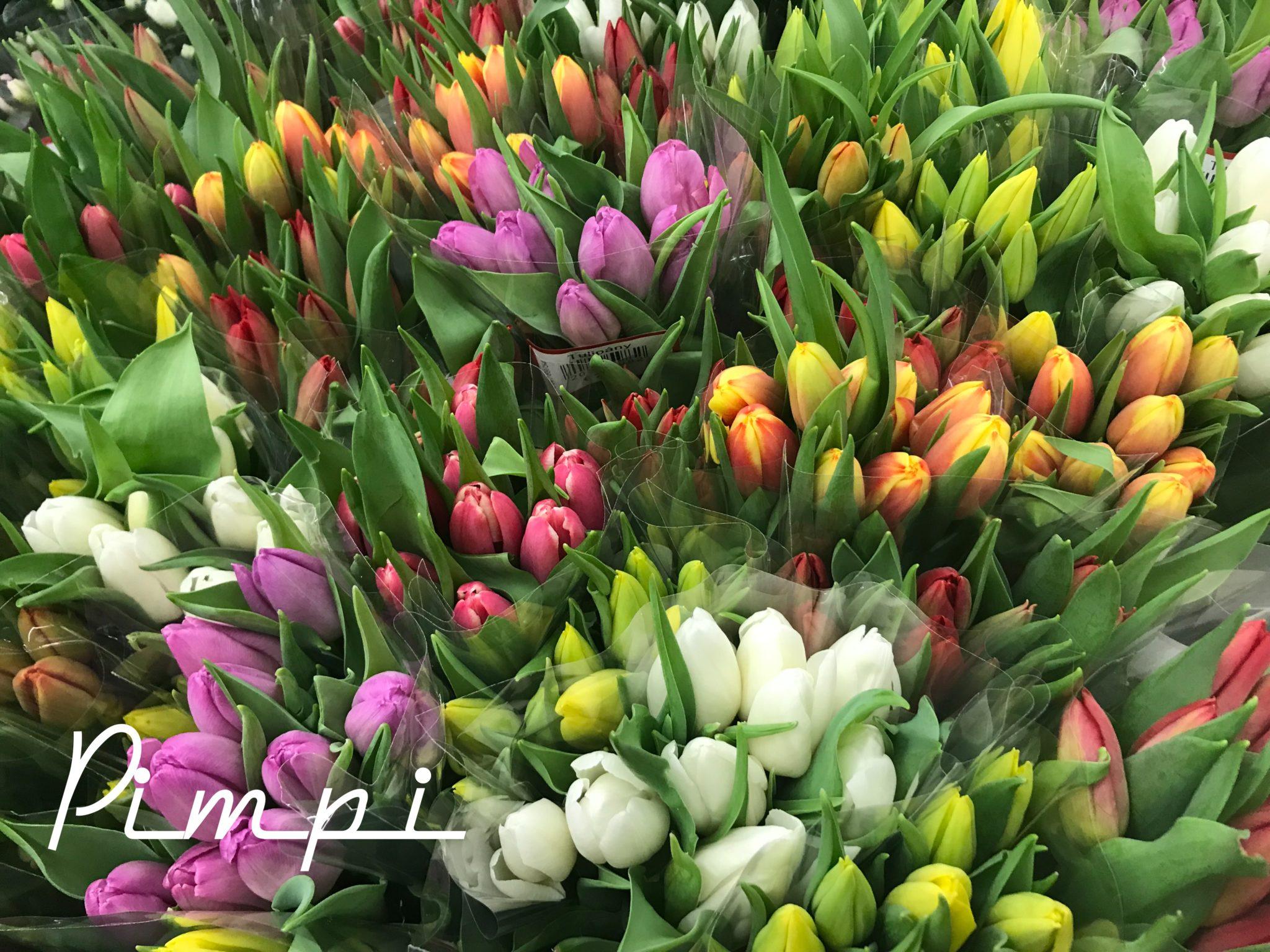 pimpi-bábo do sveta-cestuj s deťmi-mama blog-tipy-vitaj jar-jarné tipy-prechádzky-príroda-olival-kliešte-kŕmenie kačiek-upratovanie-šport-zábava