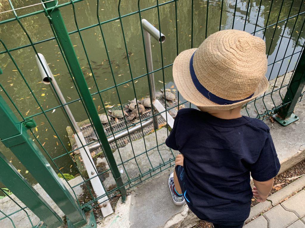 pimpi-bábo-bábätko-cestuj s deťmi-výlety-bojnice-zámok-romantika-zážitky-mama blog-rady a tipy-prehliadka-rodina-chlapček na palube-zábava-čajka v oblakoch-kúpele-baby friendly-vyhliadkova veza-ihrisko-vyhlad-zoo-zoologicka zahrada-zvieratka