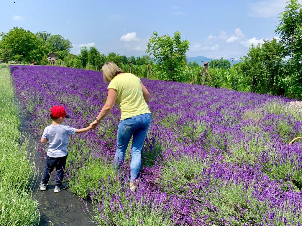 pimpi-bábo do sveta-cestuj s deťmi-výlety-levanduľa-samozber-moldava nad bodvou-budulov-východ slovenska-provensálsko-vôňa-kytičky-fialová-zážitky-voňavé